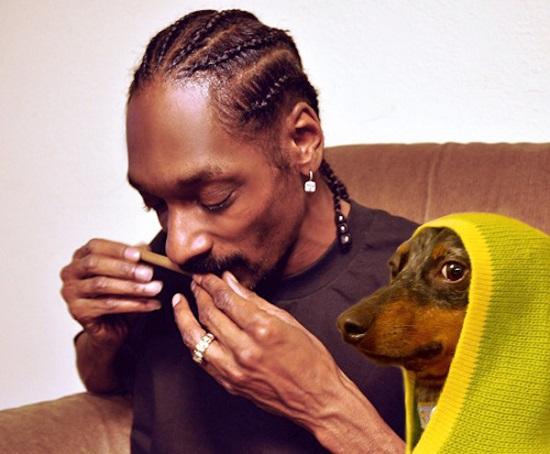snoop-dogg-has-a-dog.jpg