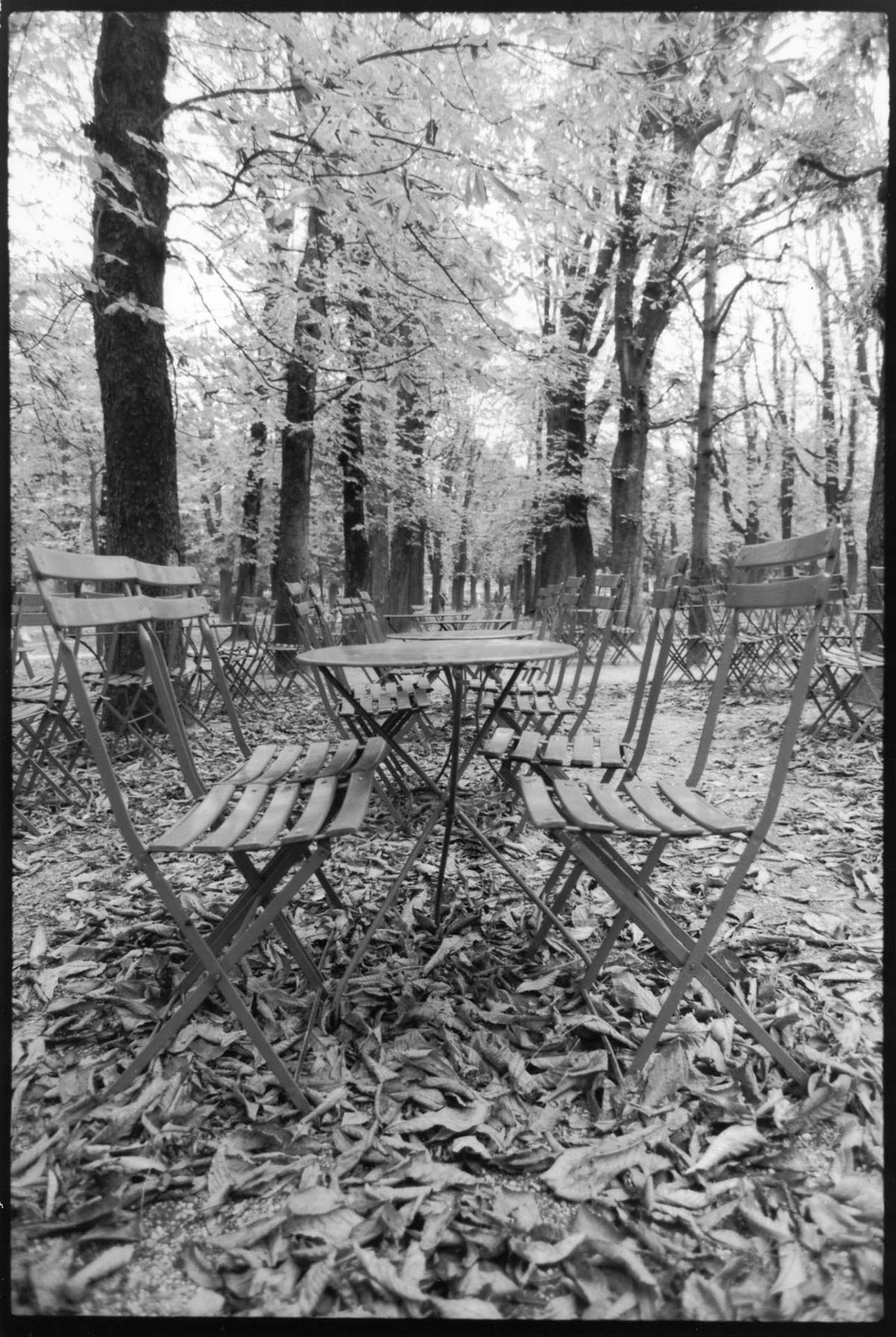 Jardin Luxembourg, Fall