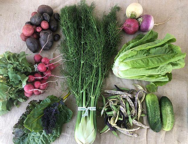 Week 7!!! This week we have taters, fennel, radishes, braising mix, bean medley, turnips, romaine lettuce, and cucumbers!!! Swipe to see the fleur share by @maddyacarrotjones ! #chomptheyard #womenwhofarm #denvercsa #eatyourgreens