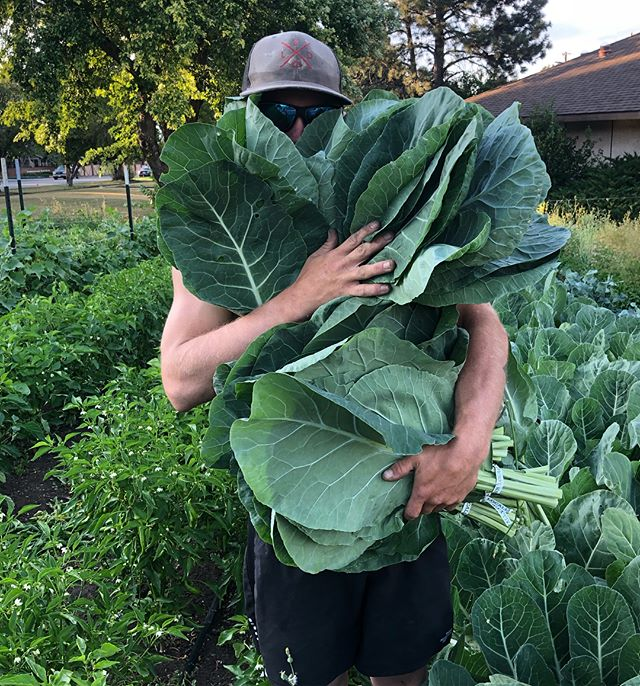 📞👵s, 🏥🔥s, and more! Come visit us @southpearlst market today 9-1!!! #callher #carehots #collards #carrots #knowwhatimean