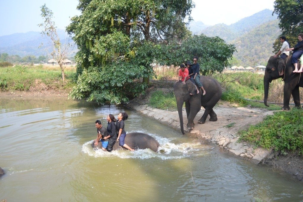 """""""Swimming"""" with elephants--there is a look of complete fear on my face!"""