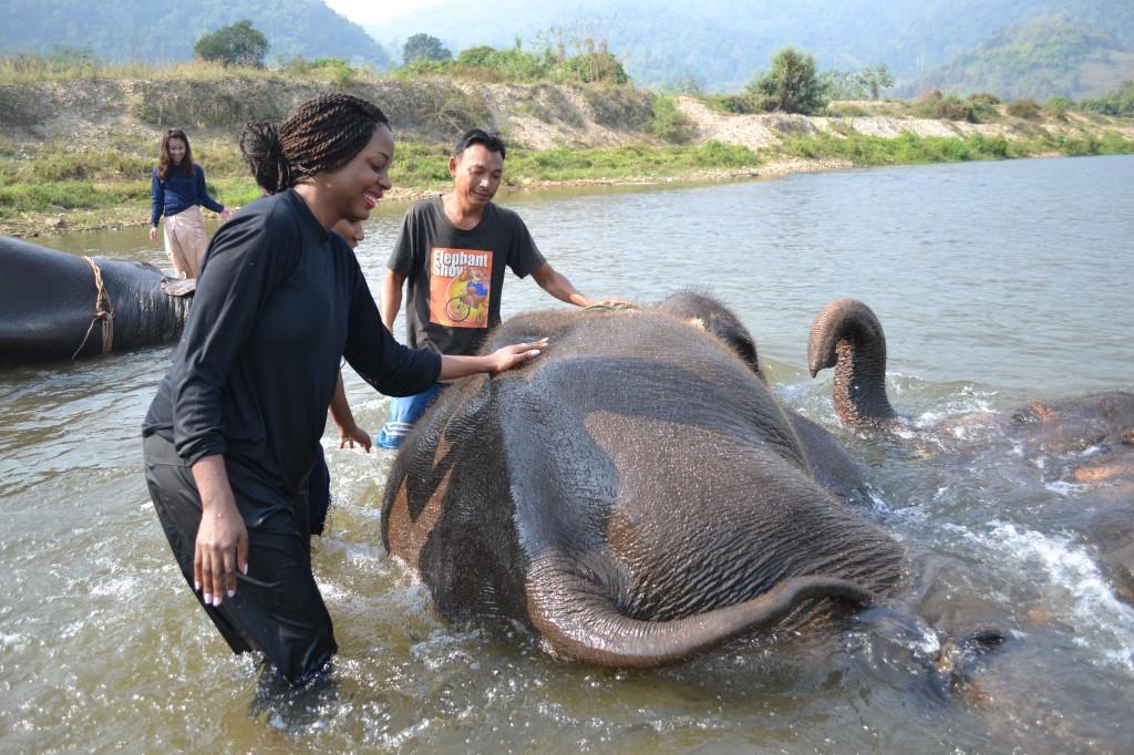 """""""Bathing"""" the elephants"""