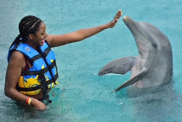 dolphin love.jpg