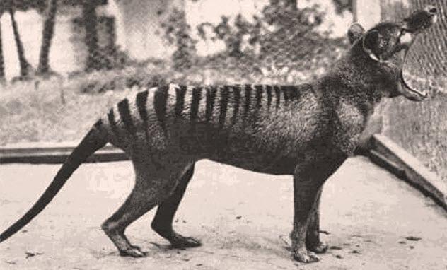 Top 10 Animal Endlings: The Last of Their Kind Before Extinction -