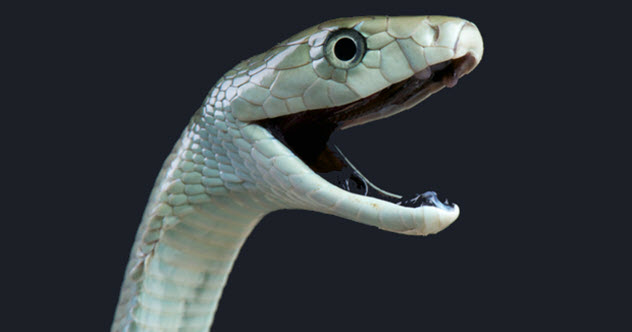 Top 10 Exotic Pets That Killed Their Owners -
