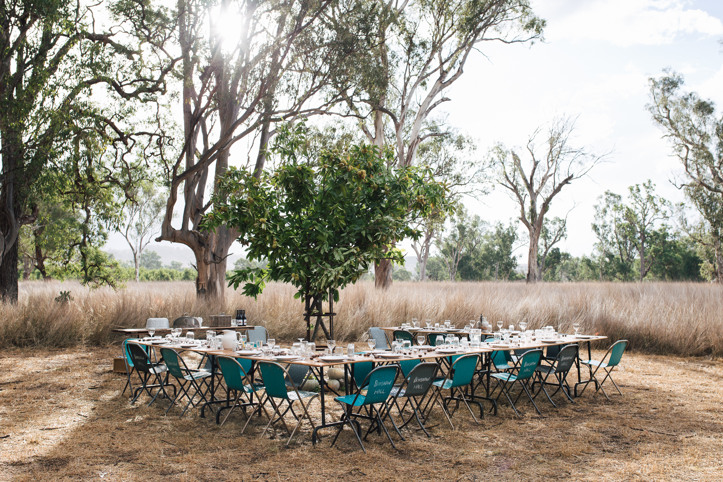 The fundraising party at the pecan farm. Gillian cooked the food - roasted pork with fennel, pecan nuts and apple among other things - and Annabelle set the scene with this chestnut branch installation