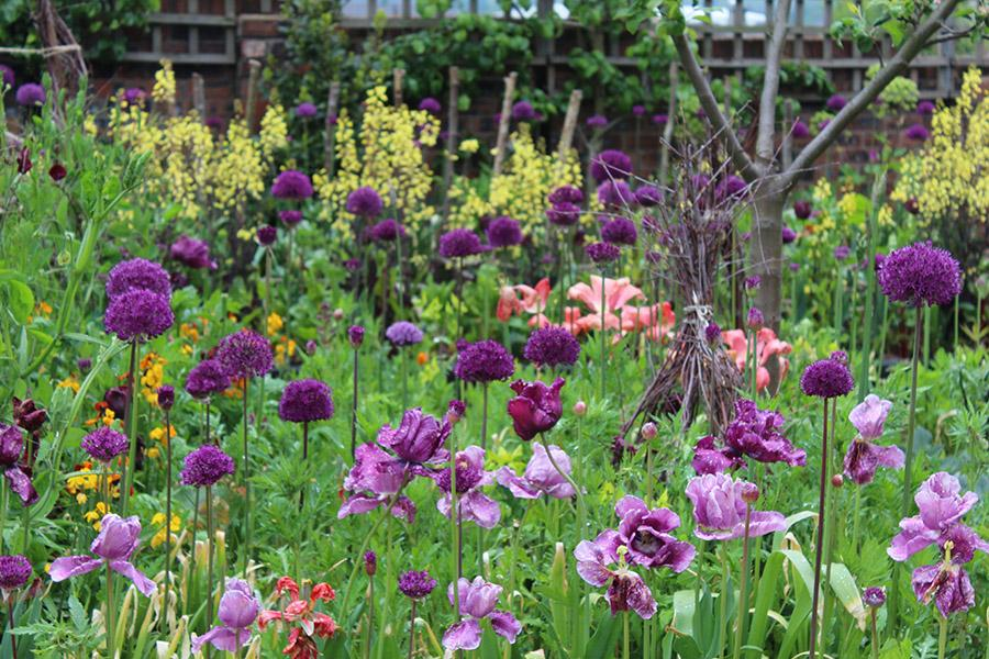 A sea of alliums and tulips in Arthur Parkinson's hen friendly garden at the back of the Emma Bridgewater pottery factory in Stoke-on-Trent, England.