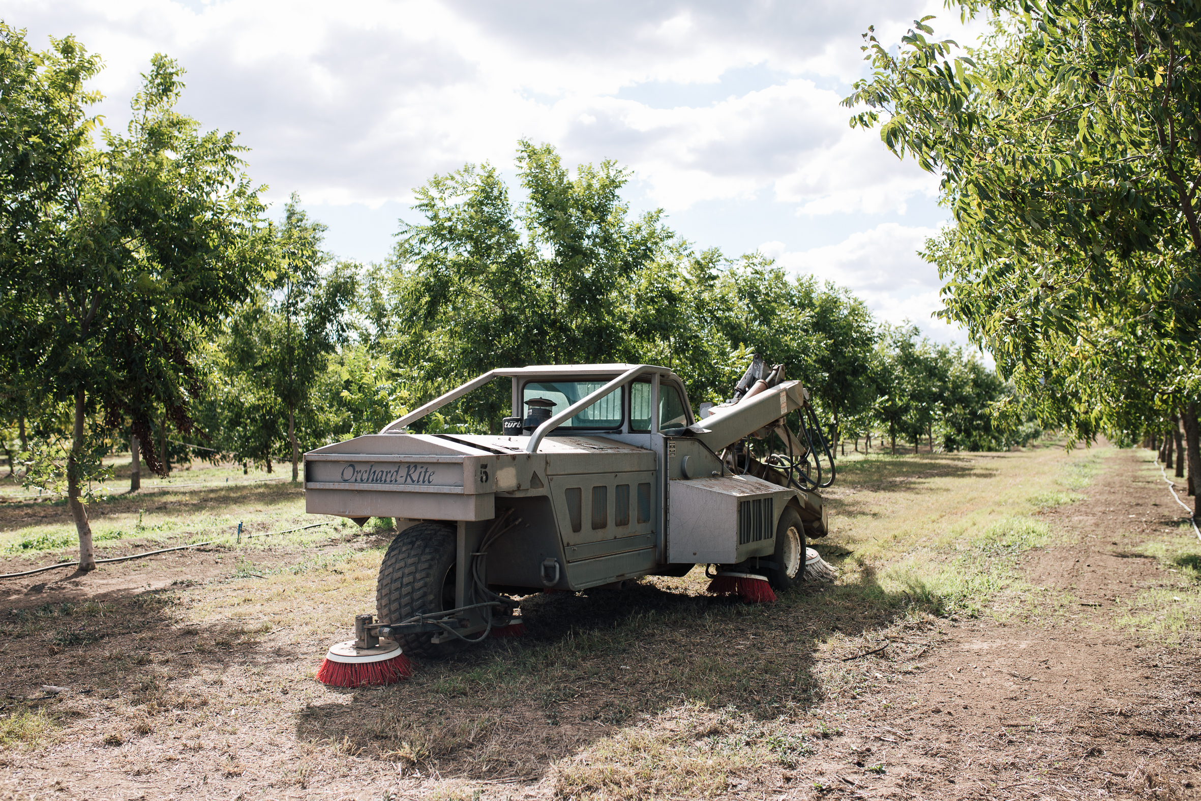 The pecan tree shaker