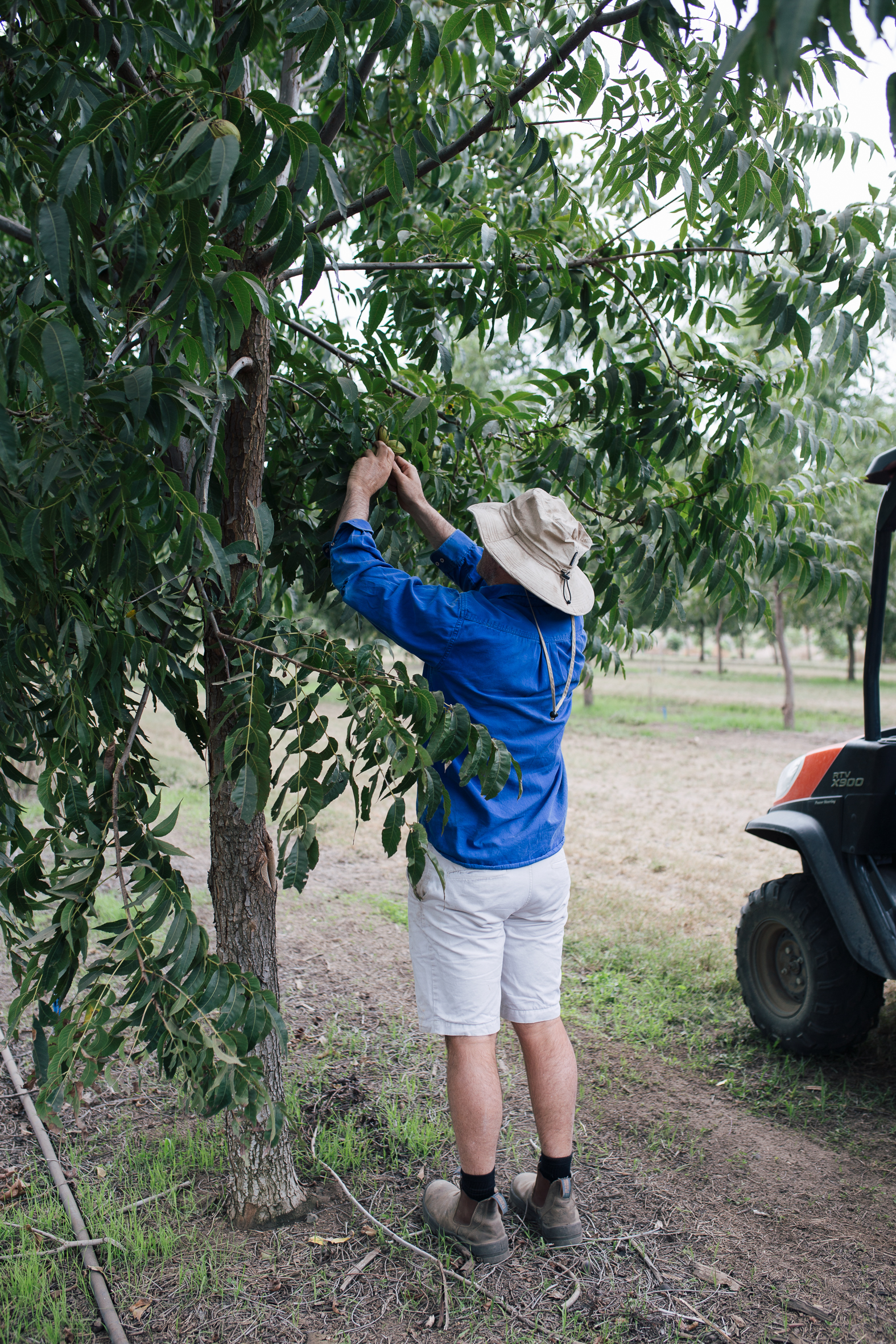 A very excited Ed inspecting the pecans