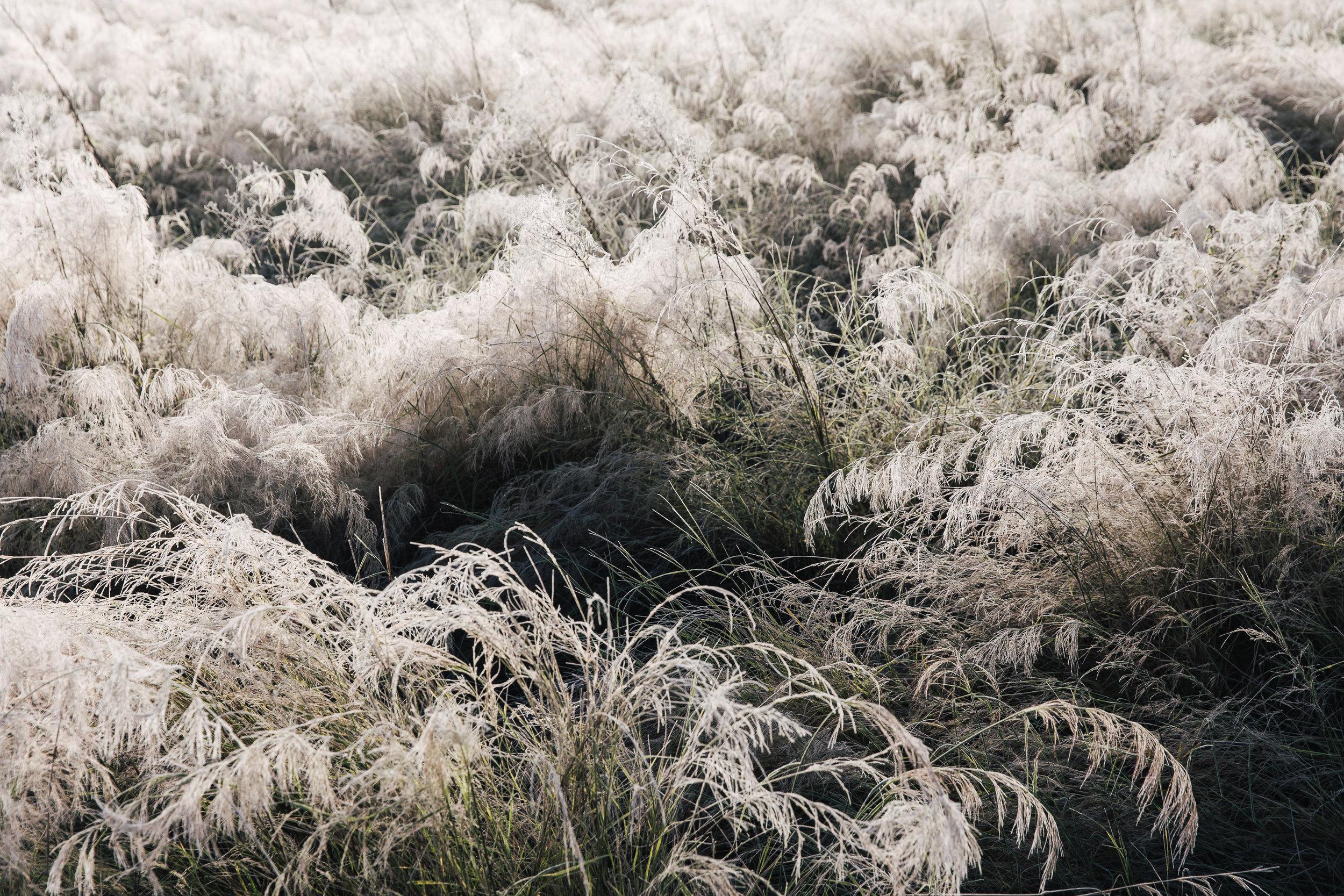 Winter on the pecan farm