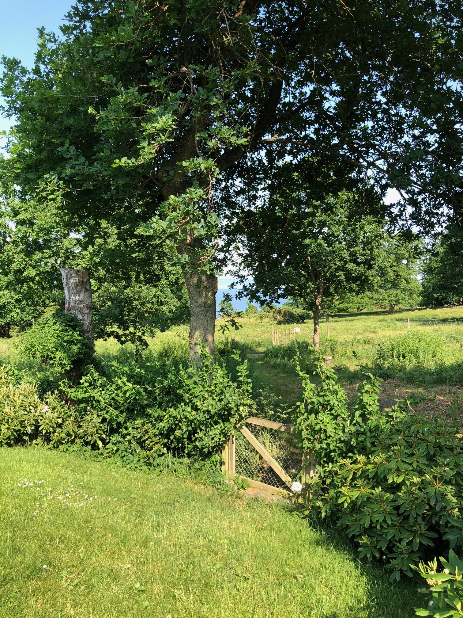 I can see the sea from the kitchen, across the garden and fell meadows. Arild, Sweden.