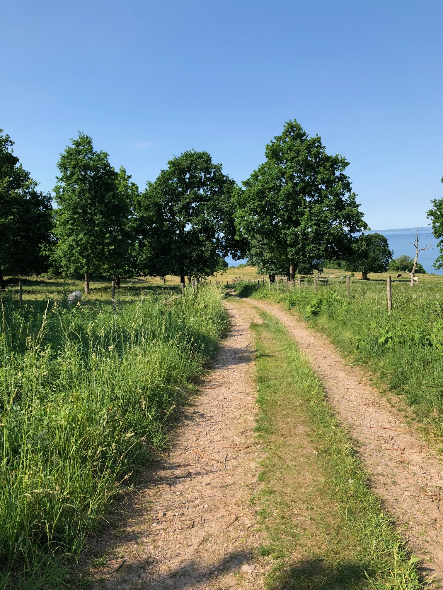 Daily walks down to the sea. Arild, Sweden.