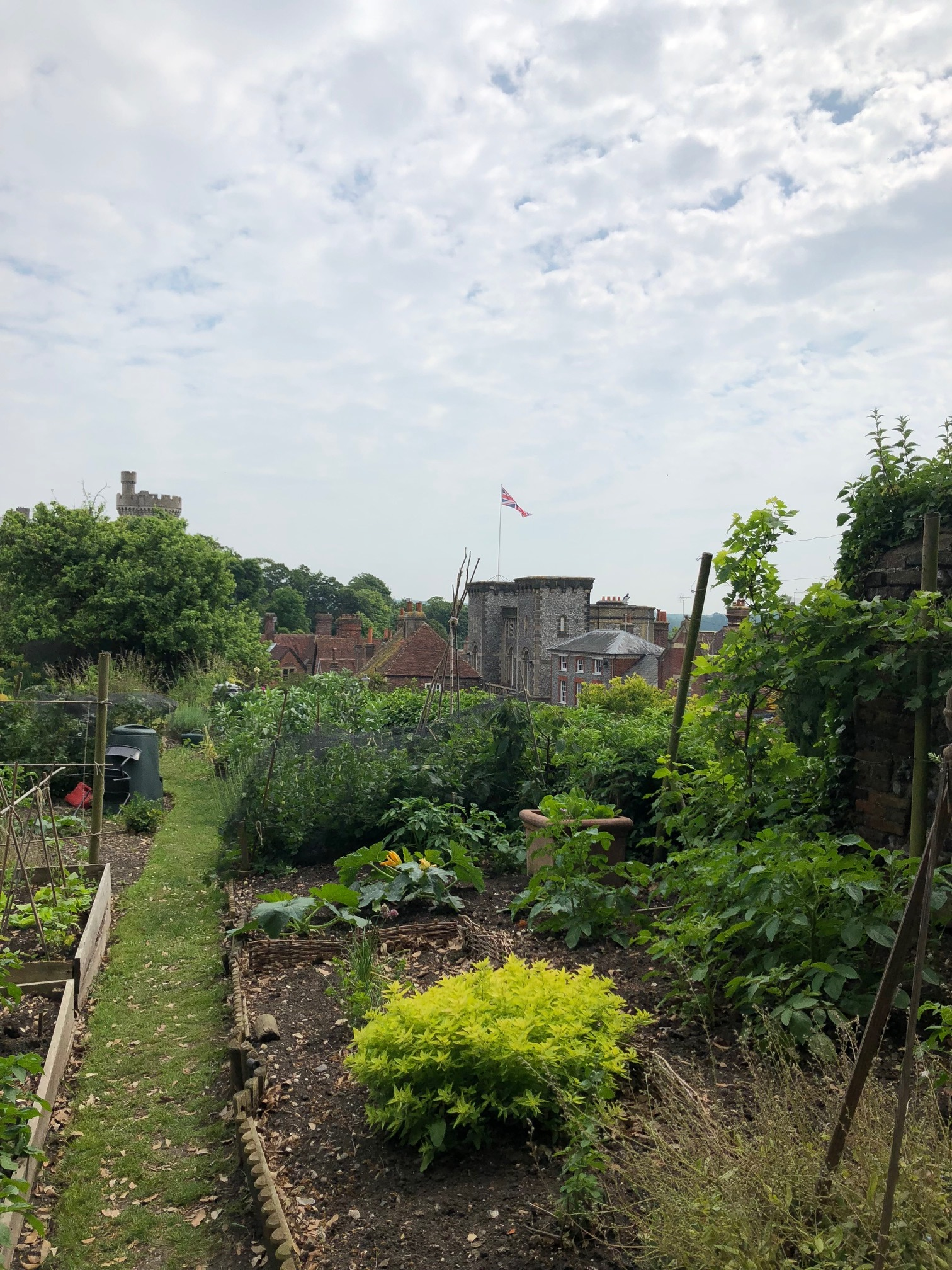 My friend  @felicity_lock 's allotment in Arundel. It wins the prettiest allotment with best view award from me.