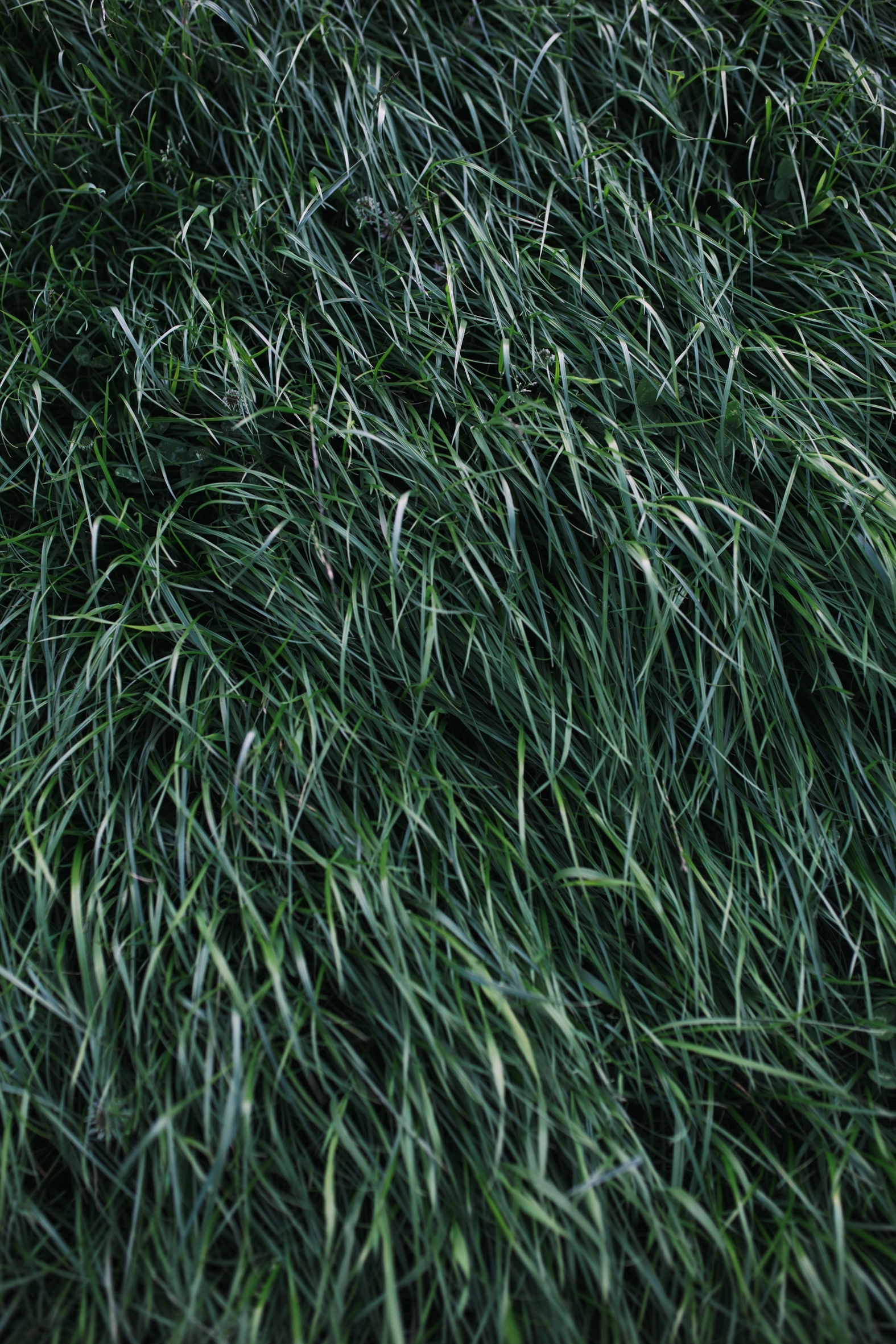 dispatch 11 grass-40.jpg