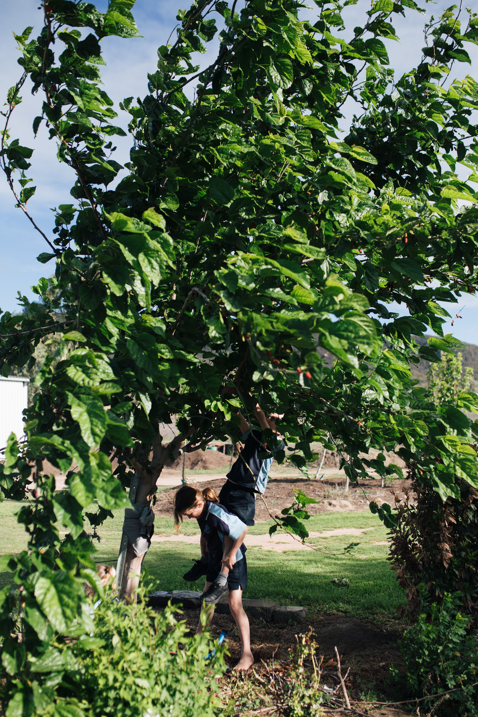 The children picking mulberries
