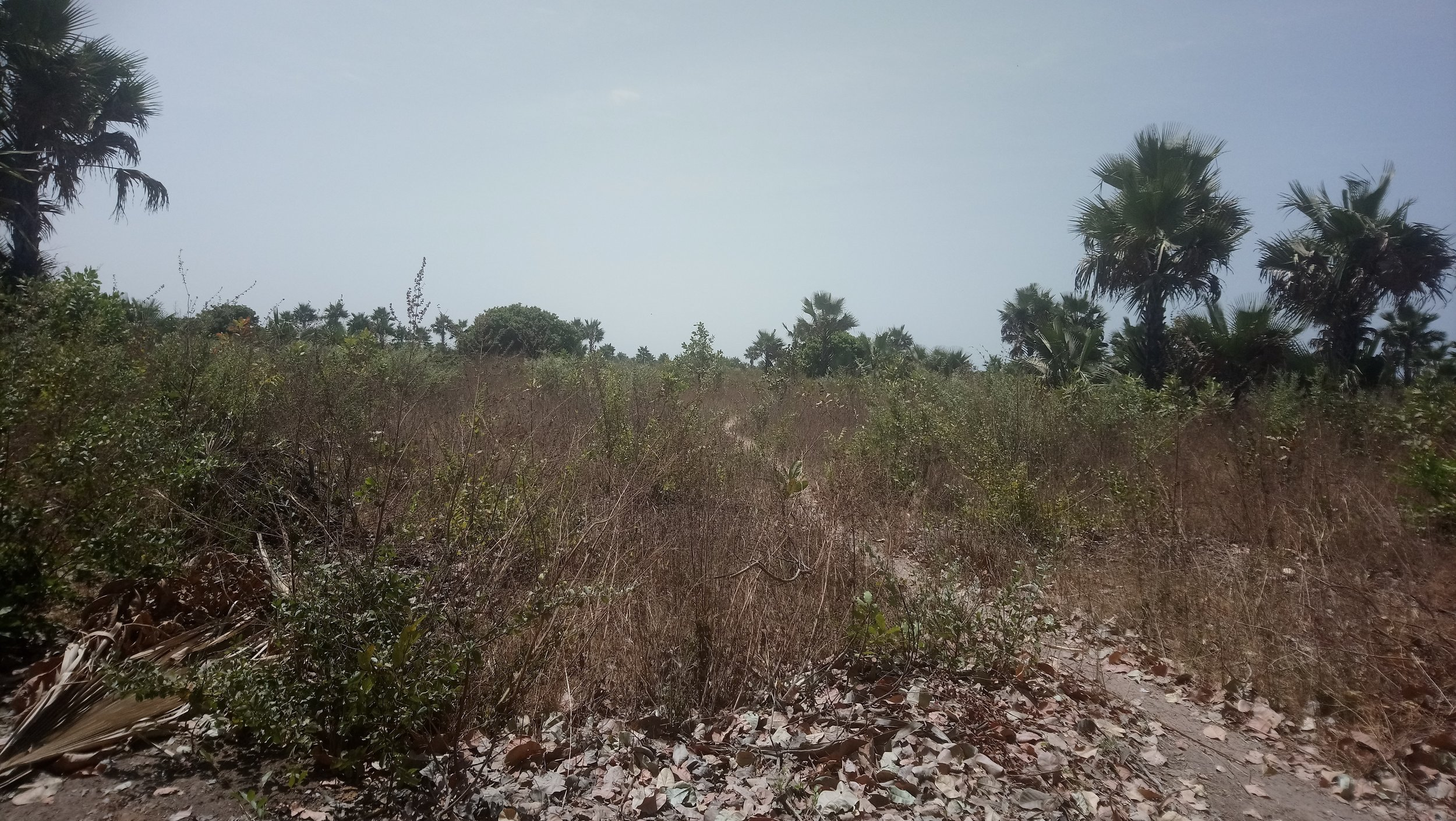 Land for sale in Gambia build a house holiday home DHK Estates GUNJUR