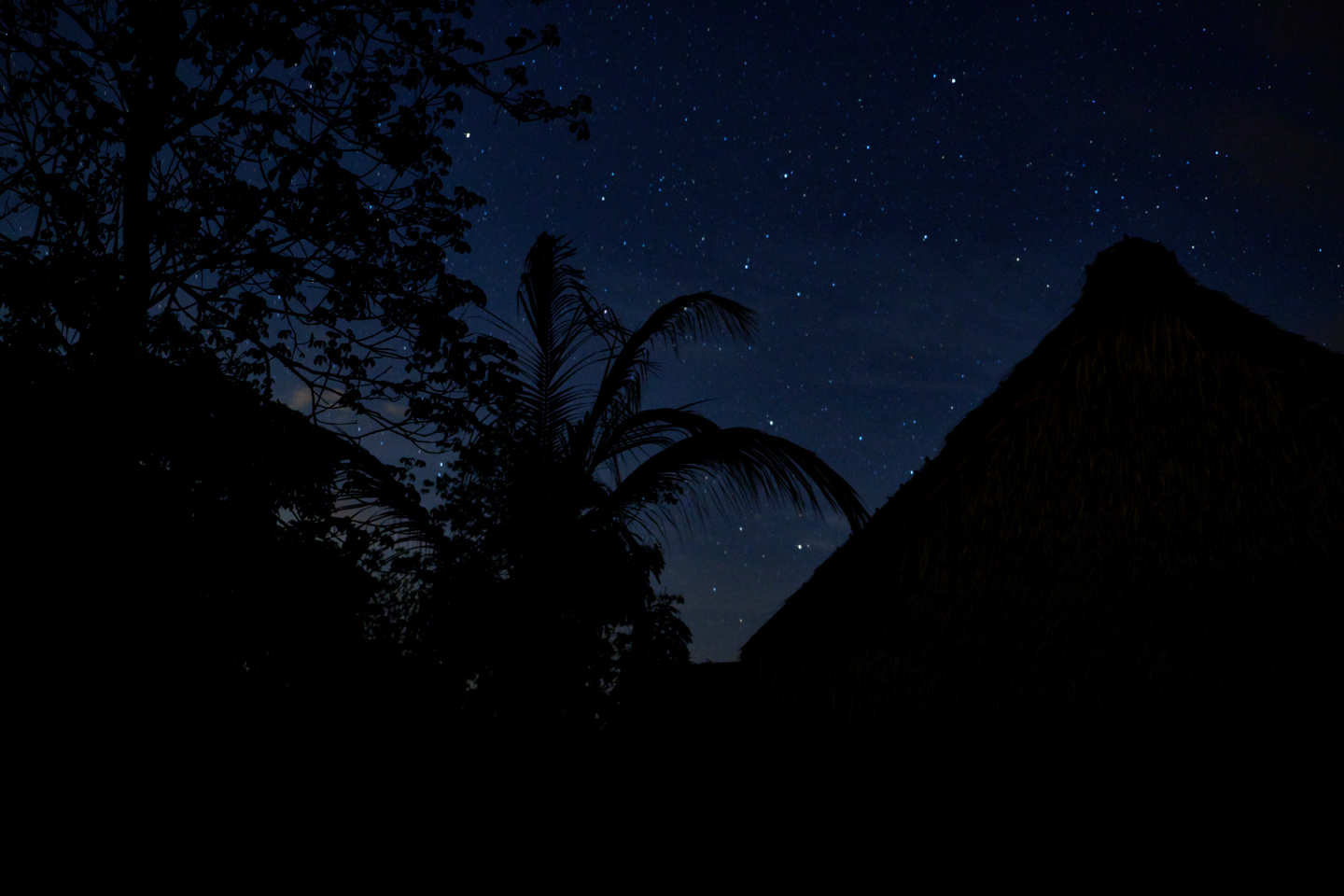 Nightsky in the jungle is mesmerizing