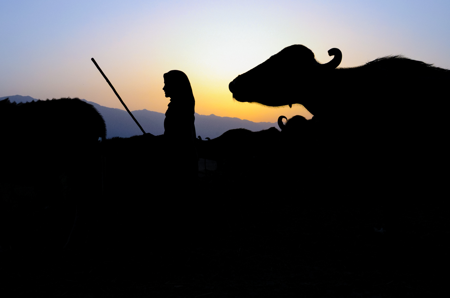 12-year-old Bashi watches her family's herd along the Asan River, as the sun begins to rise.