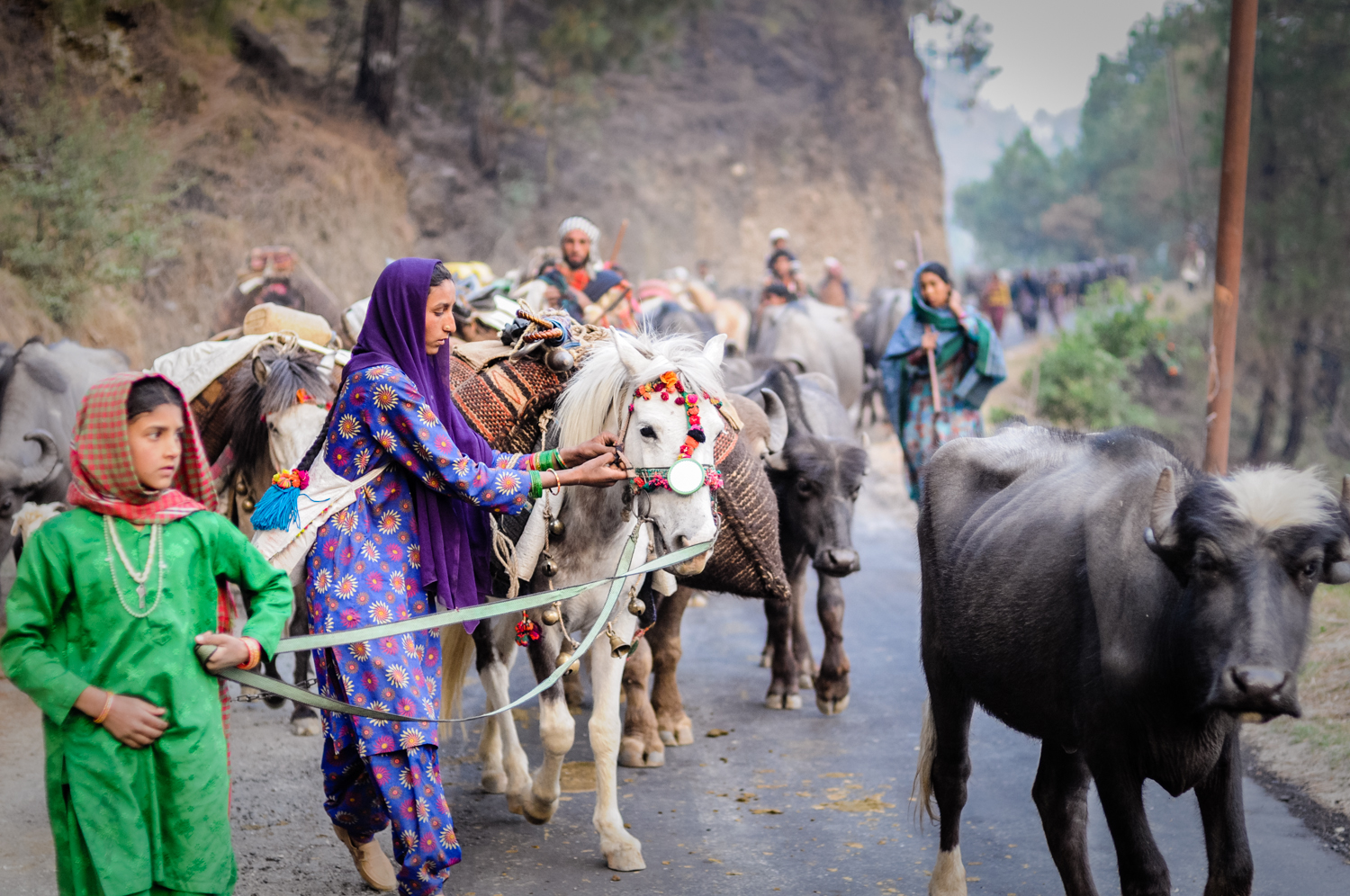 Moving the animals up the Yamuna Valley, in the foothills of the Himalayas. Here, Khatoon is adjusting the halter on a pack horse.