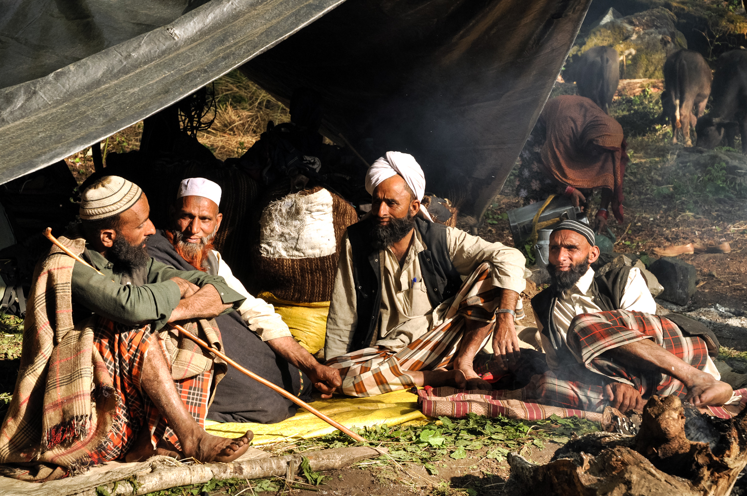 At a forest camp in the Himalayan foothills, Van Gujjar men discuss their plan for moving higher into the mountains, to the alpine meadows where they will spend the summer. The trick will be avoiding - or successfully bribing - the forest rangers, who will surely hassle the nomads if they meet.