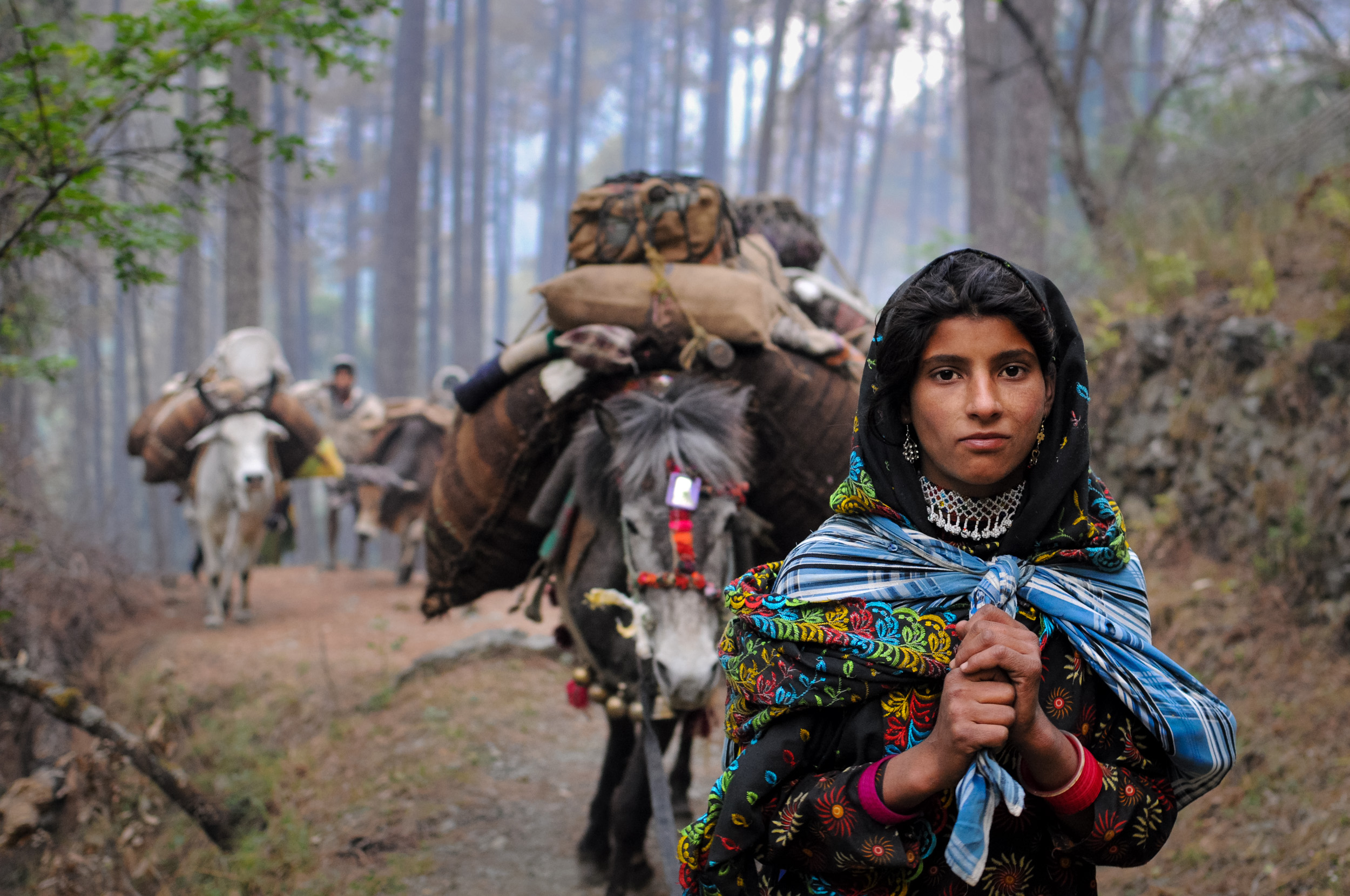 17-year-old Mariam leads the caravan through forested Himalayan foothills. She's carrying her 2-year-old niece in the shawl that's wrapped over her shoulders.
