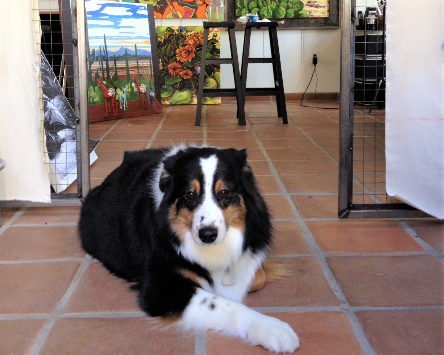 This cute guy was Dobs. He was a wonderful friend and companion. He is photographed here at my Aunt's studio.