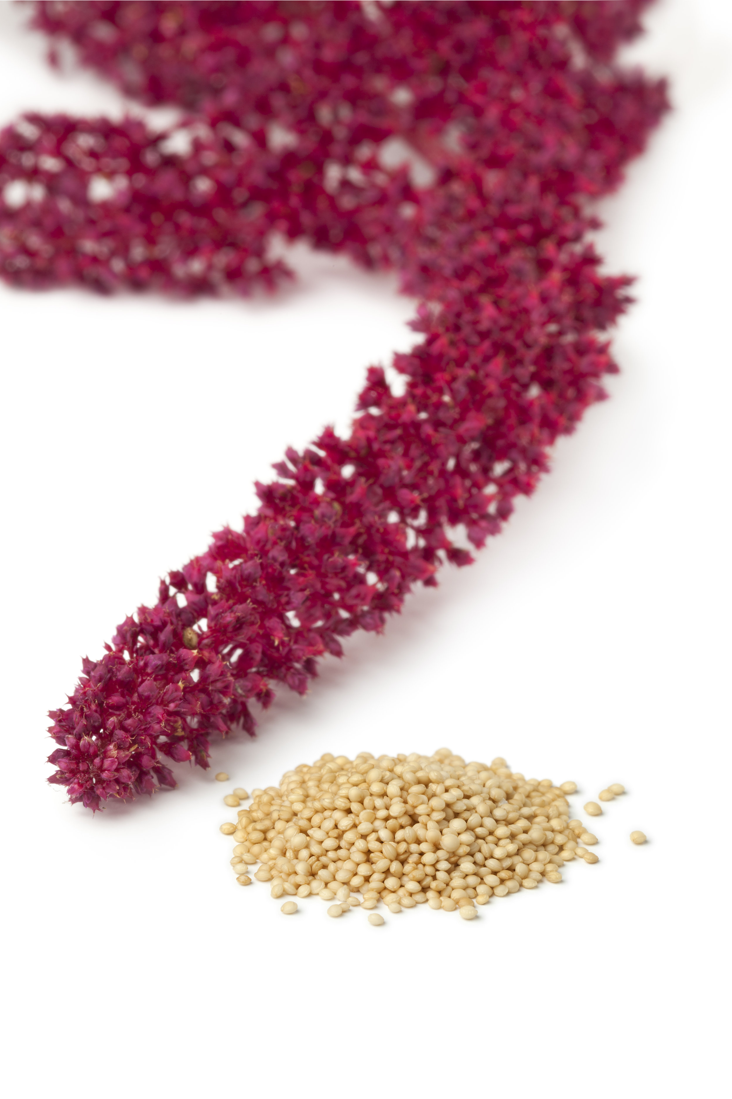 The unmistakable amaranth plant and amaranth seeds