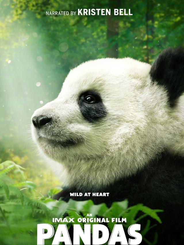 Pandas Poster Image.jpg