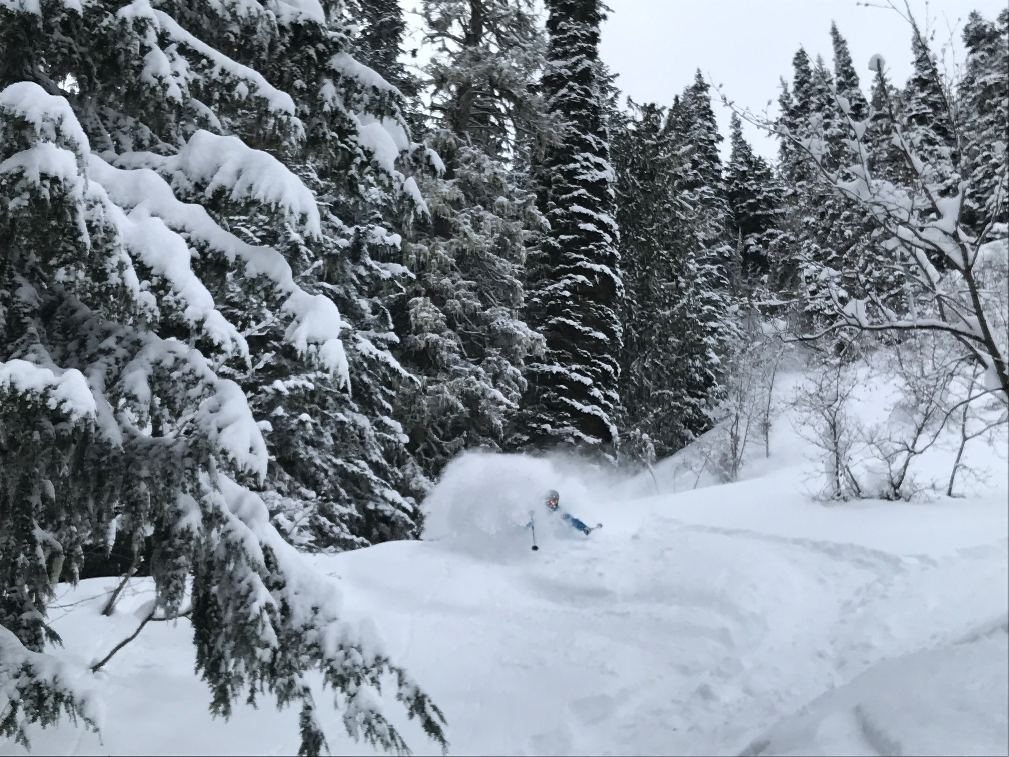 Welcoming in March with 45cm of cold blower overnight in Whistler!