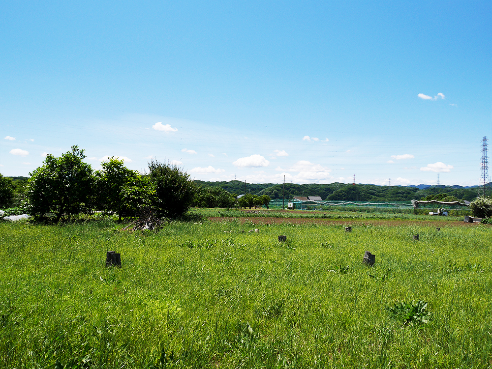 farm_01.jpg