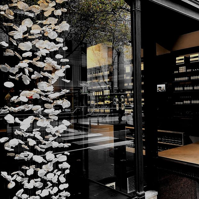I am incredibly happy to partner with one of my favourites, @aesopskincare. . A brand I have long admired for their relationship with design, meticulously created interiors and incredible products. . I have created two window installations for their beautiful Collins St store. . Window one, 'Float' has 1003 porcelain components, forming cloud like clusters, spanning a drop of 2.5metres, encompassing the entire window length. . Window two, 'Cascade' has 205 porcelain components, forming a dramatic organic cluster, spanning a drop of 1.5metres, simply framed by the strong black tones of the windows. . Light and shade, along with forms inspired by nature are explored, and sit beautifully with the distinctive Aesop aesthetic. . #porcelain #suspendedinstallation #suspendedart #art #design #handcrafted #organic #white #taxonomyofdesign #aesop #aesopskincare #interiordesign #fineart #jenniferconroysculpturalceramics #jenniferconroysmithceramics #sculpturalceramics #commissions #melbourne