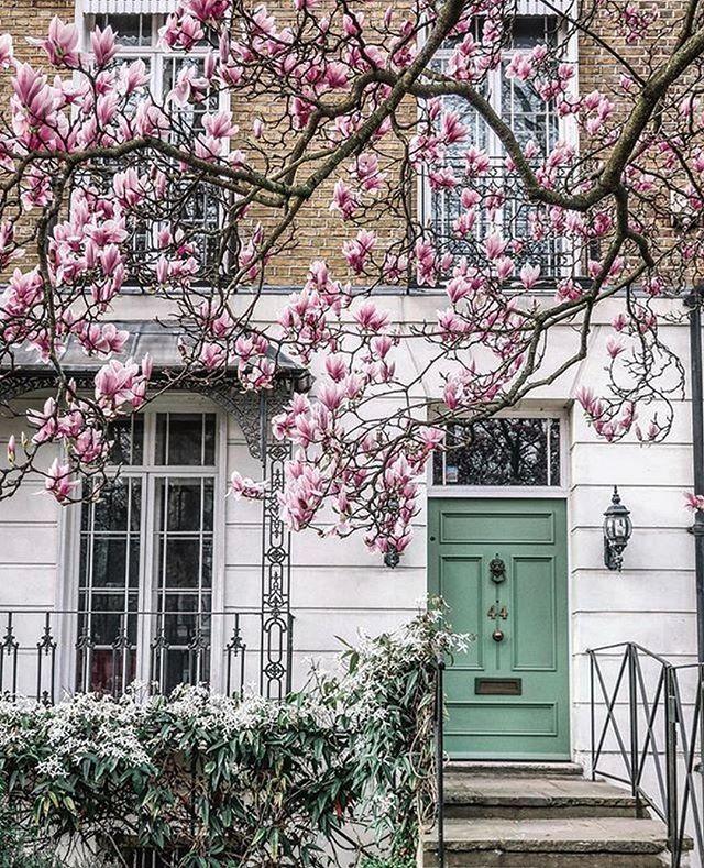 Spring in London 🌸