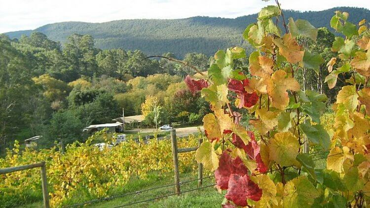 Tasmania has many world class wineries
