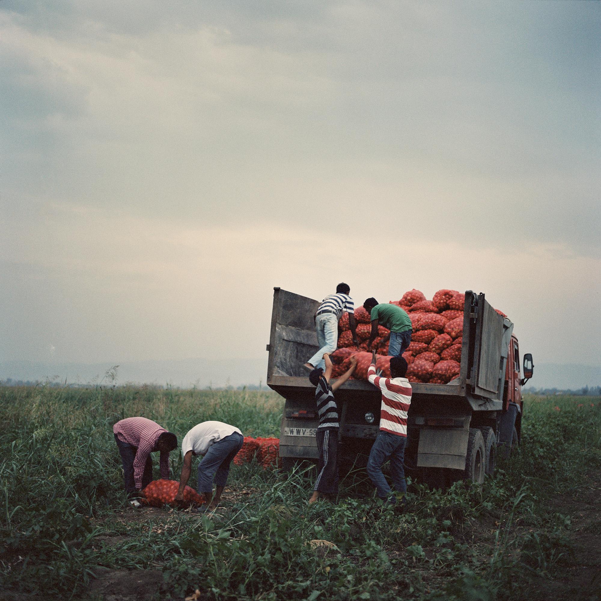 Sikh farmers_20.jpg