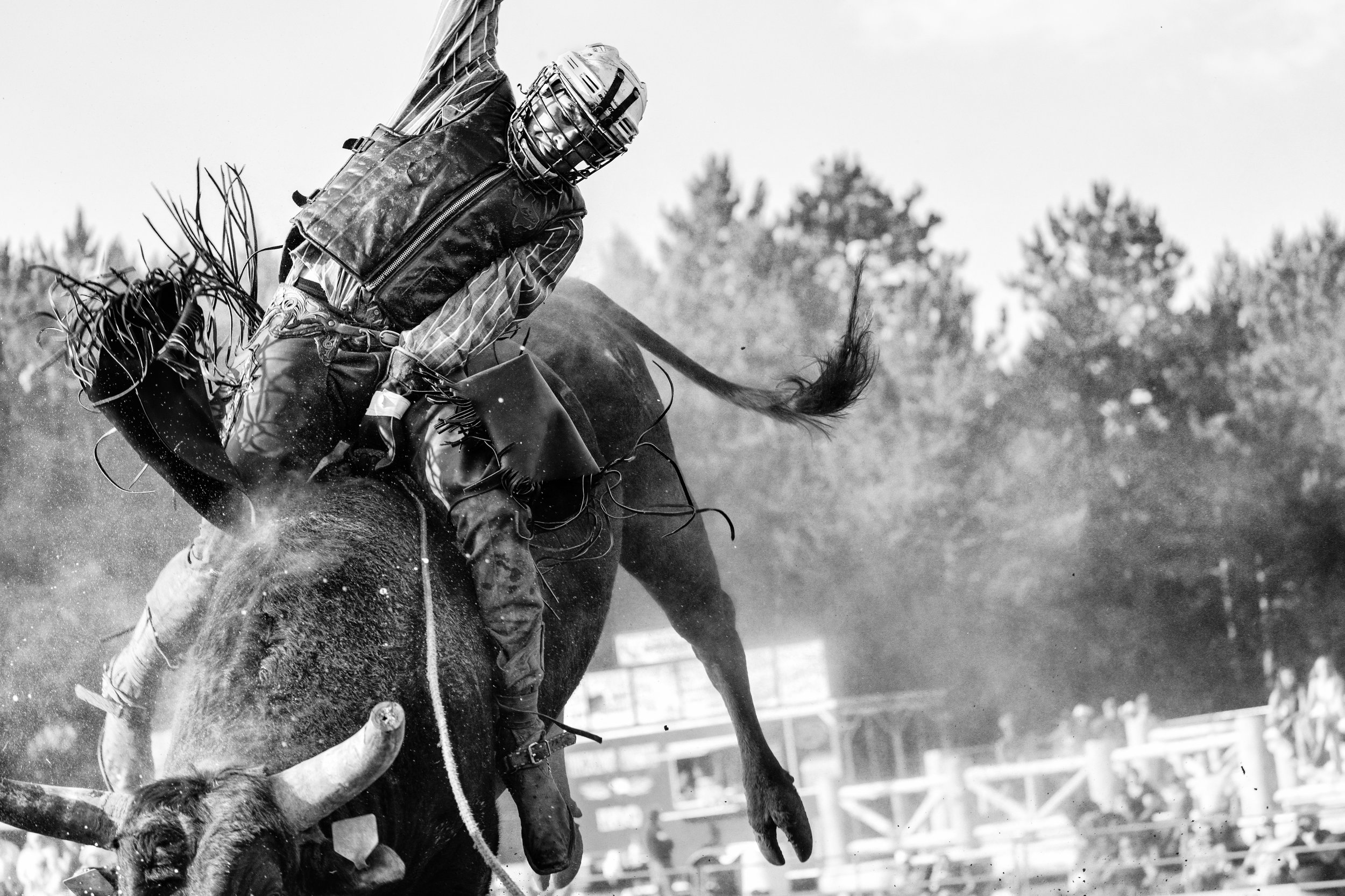 A bull rider at the 40th Annual Park Rapids Rodeo, Park Rapids Minnesota
