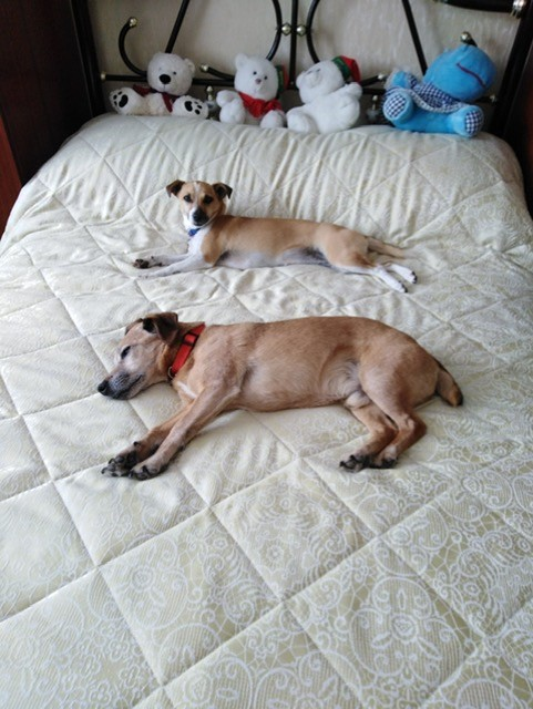 Zeek and Sandy on the bed.jpg