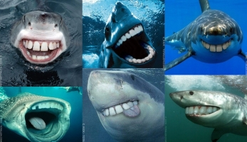 If sharks had our teeth. Damn, look at those scary predators!