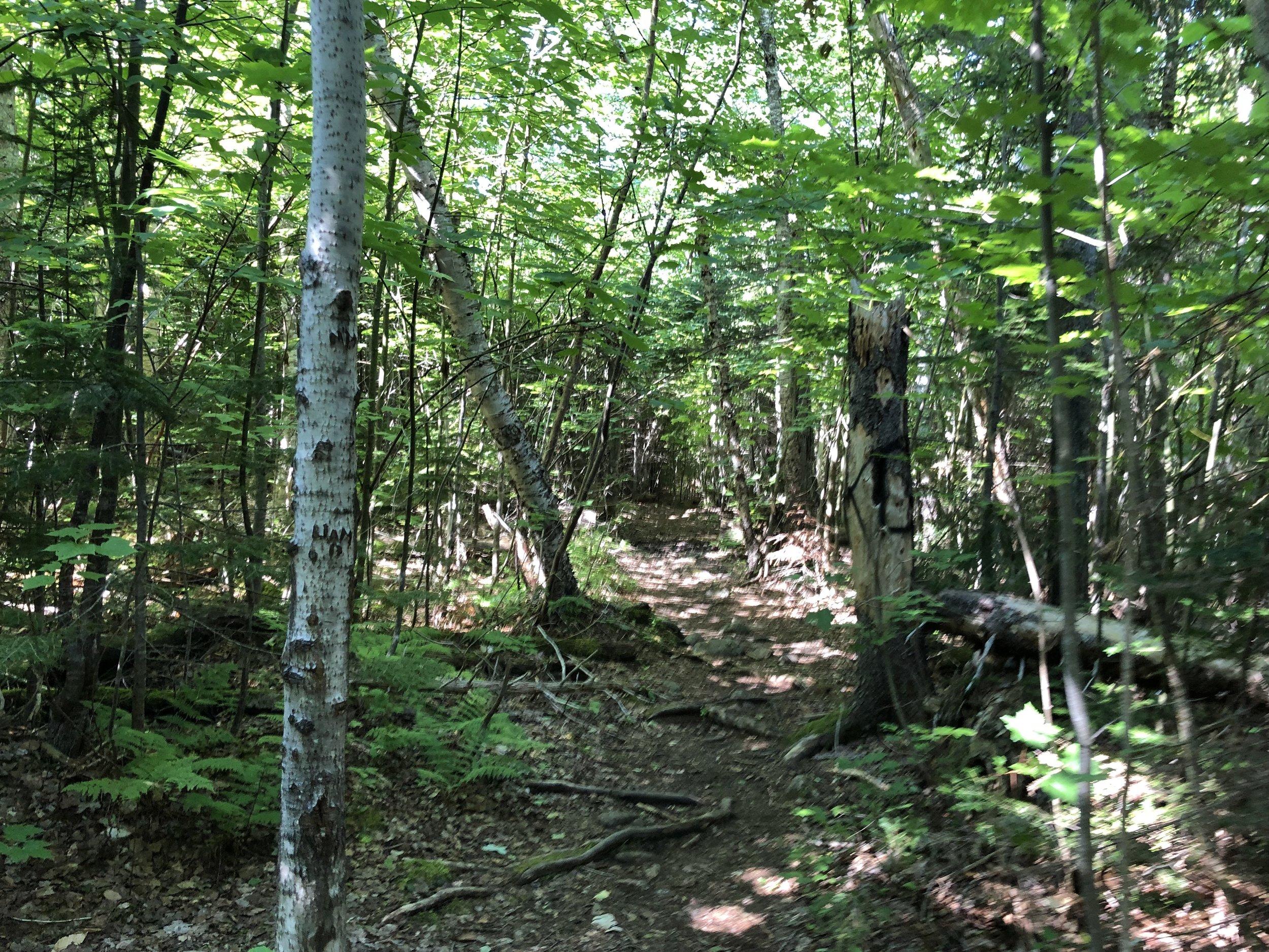 Kluskap Trail