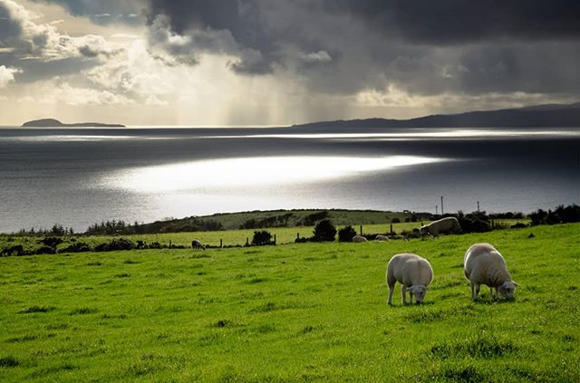 A meal with a view!  These sheep must have one if the best views in the world. Another shot from my recent trip to the Isle of Arran. Such a beautiful place, I'm already planning a more dedicated photography trip on the near future. . . . . . . . . #arran #seaview #sheep #landscapephotography #outdoor #hiking #scotland #scottishislands #seascape #farmland #outdoorphotography #light #rain #seaside #uk #lanscapes #holiday #travelphotography #travel #explore #adventure