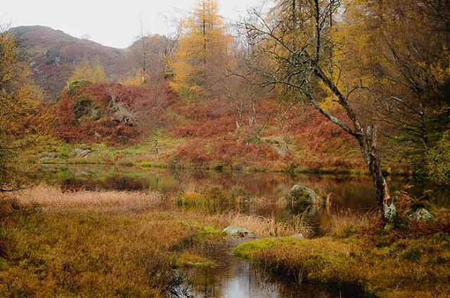 One from last year. Love the autumn colours on Holme Fell! . . . . . . . . #autumn #fall #woodland #lake #mountainlake #mountains #landscapes #landscapephotography #lakedistrict #lakeland #cumbria #uk #countryside #autumncolours #fallcolors #hiking #explore #travel #outdoorphotography #outdoors