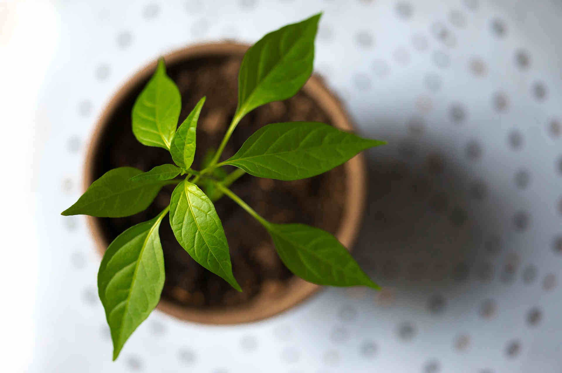 growing-plant-from-above.jpg