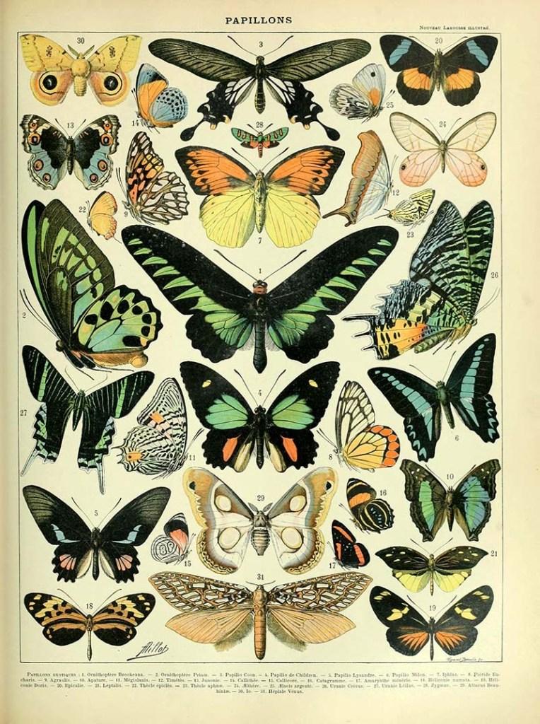 Adolphe_Millot_papillons-pour_tous-s.jpg
