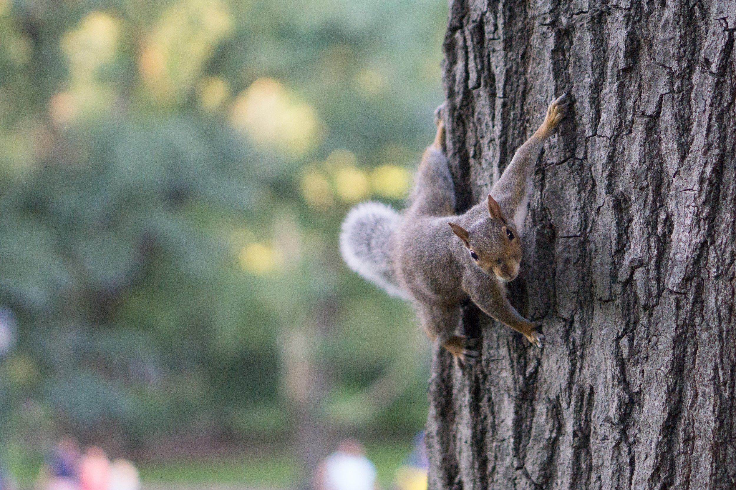 - Hey look! A squirrel!