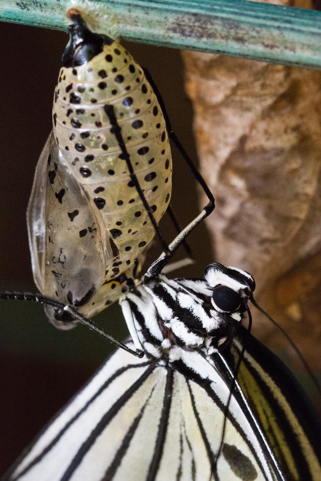 butterfly-2897268_1920.jpg