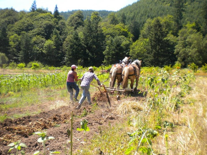 Plowing with horses on Ruby & Amber's Farm.