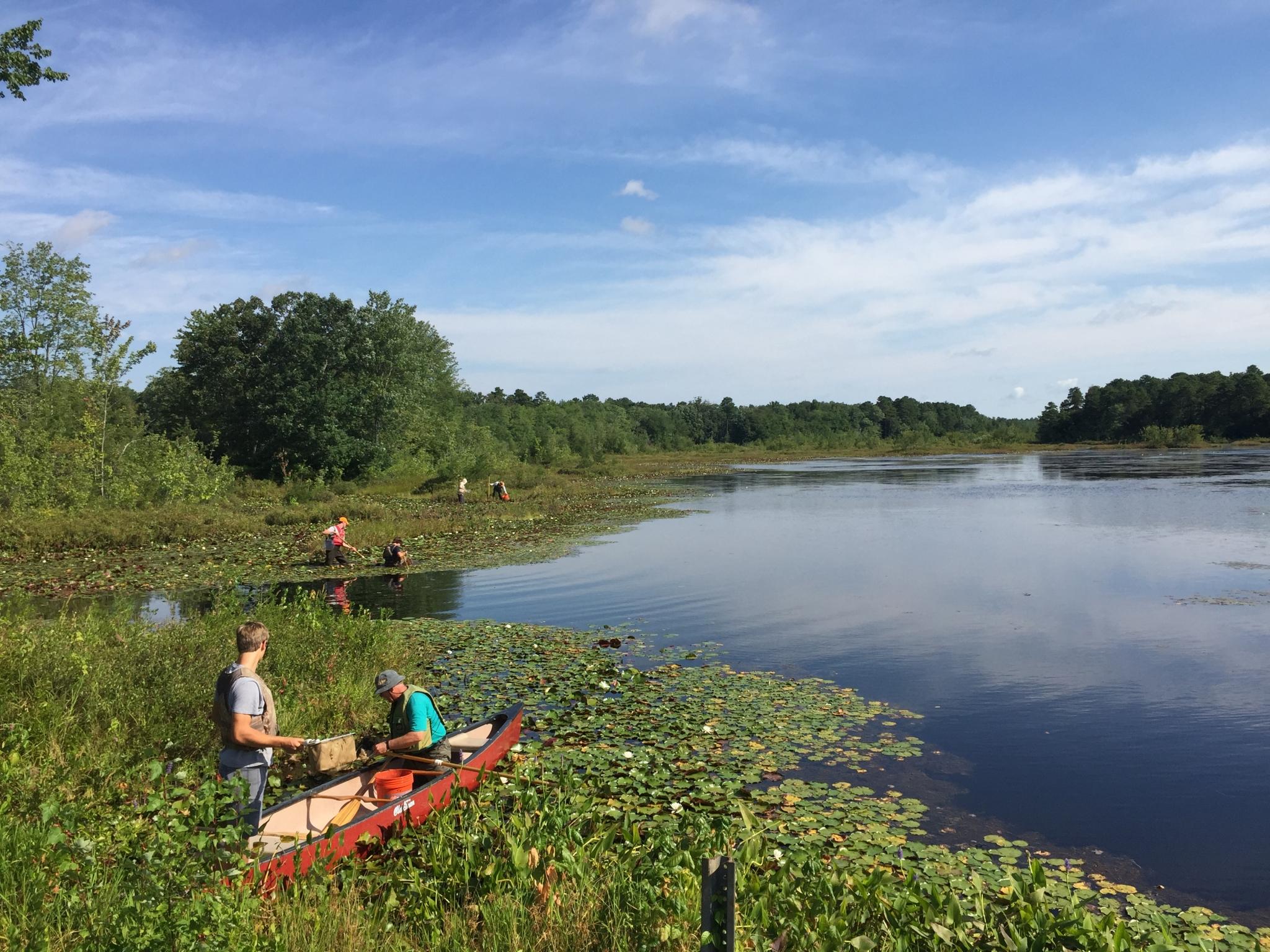 Maurice River, NJ, credit: Karla Rossini, Tributary Manumuskin Cumberland Pond, National Park Service Dragonfly Sampling Project
