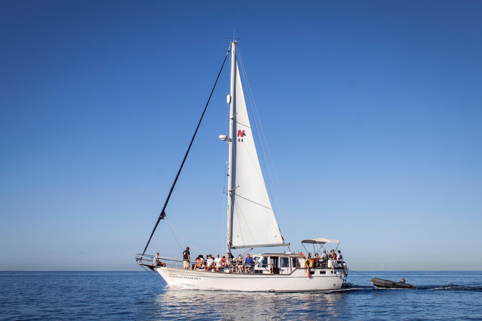 Gavião Boat