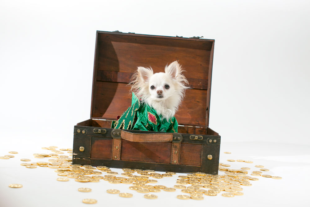 Piffles-TreasureChest.jpg
