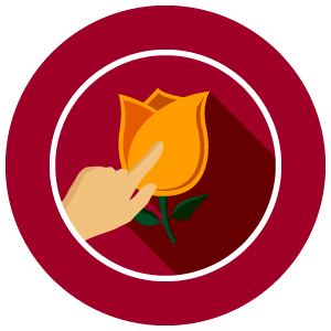don't touch - Avoid touching or folding the petals and stems.