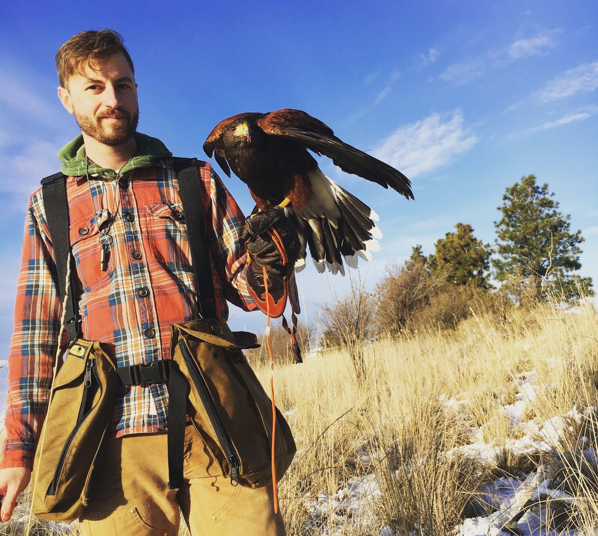 Thaddeus HIcks hunting with his Harris Hawk Ember in Walla Walla, Washington